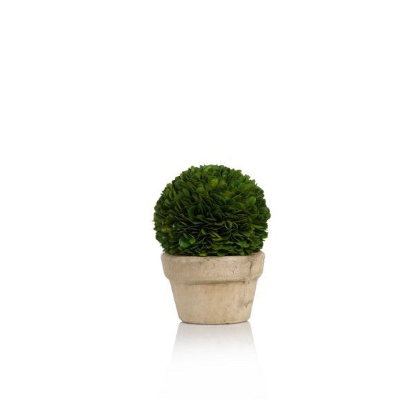 Boxwood Potted Ball Topiary - CARLYLE AVENUE