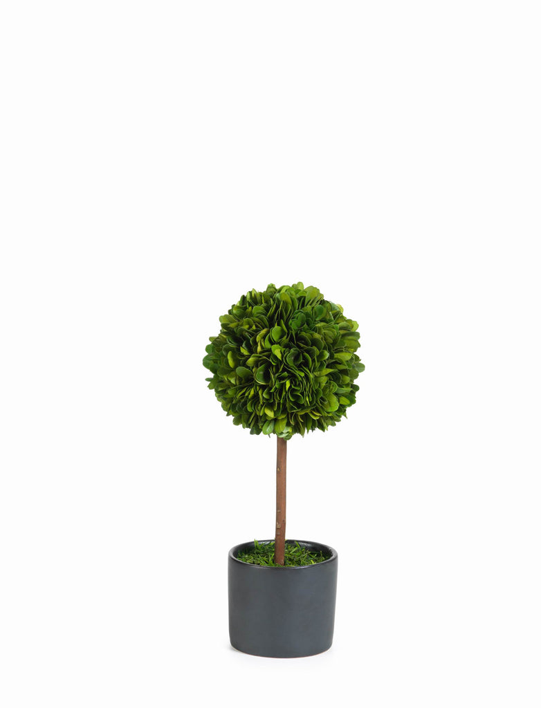 Boxwood Topiary in Black Glazed Pot - CARLYLE AVENUE