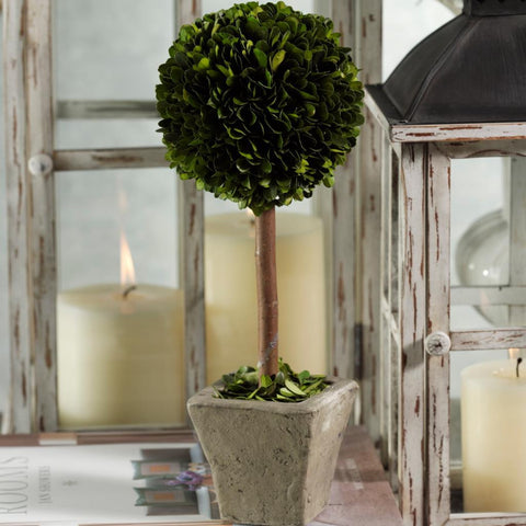 Single Ball on Stem Boxwood Topiary