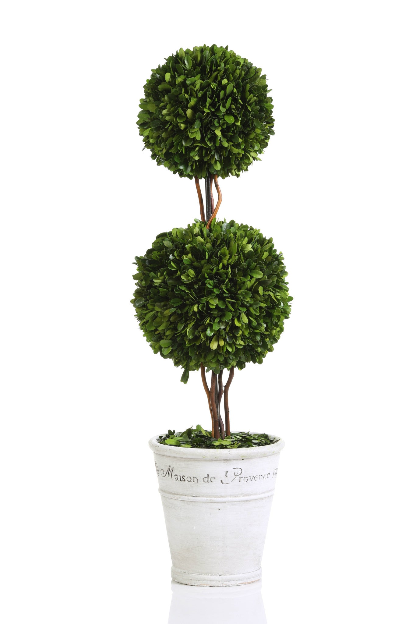Maison de Provence Potted Boxwood Topiary -  - CARLYLE AVENUE - 1
