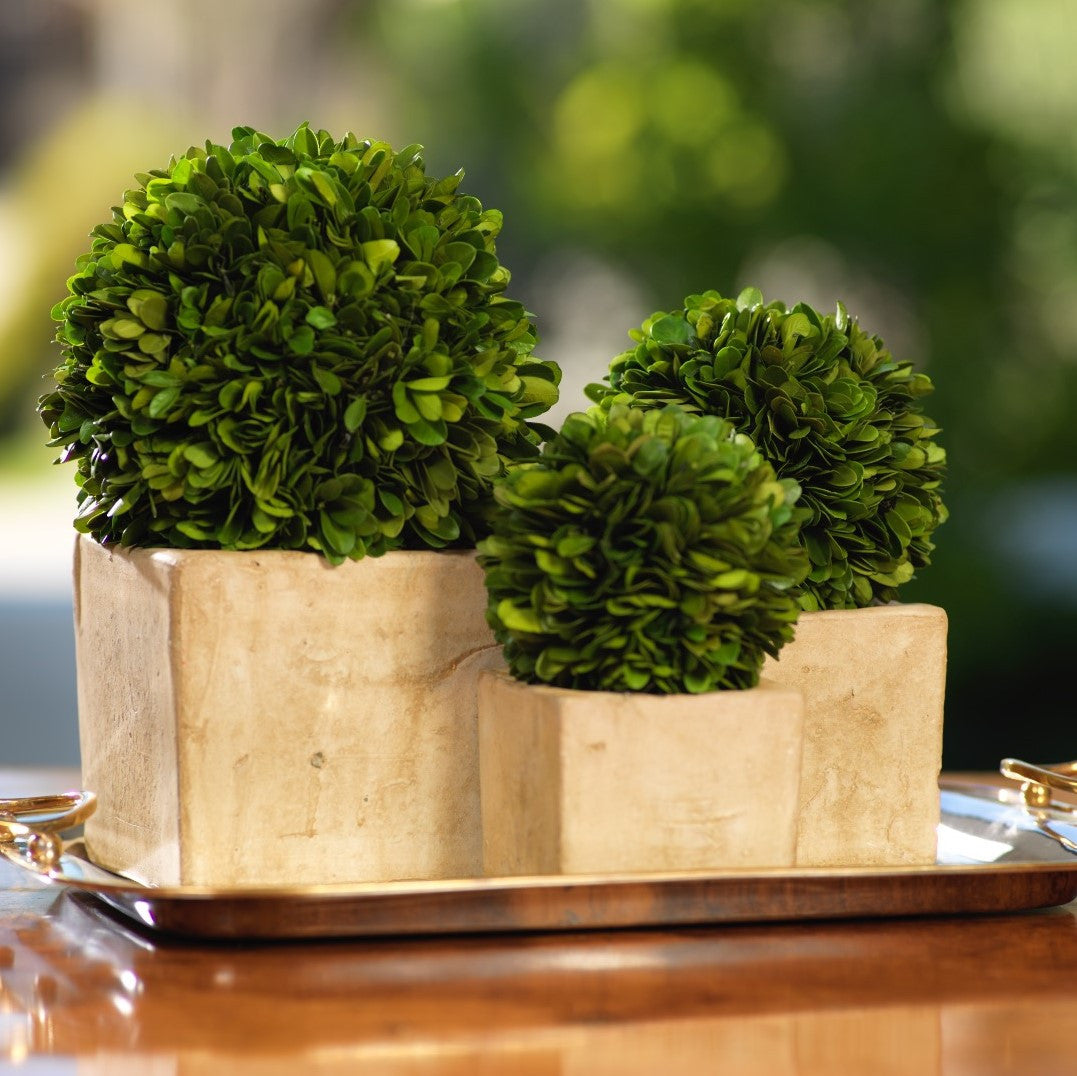 Colmar Boxwood Topiary - CARLYLE AVENUE