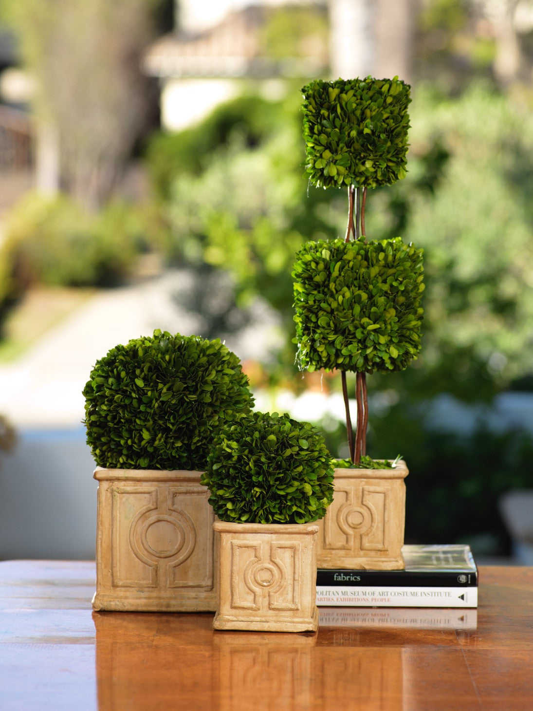 Annecy Boxwood Topiary - CARLYLE AVENUE