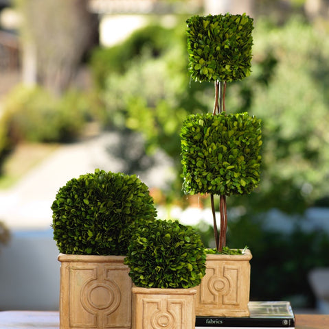 Annecy Boxwood Topiary
