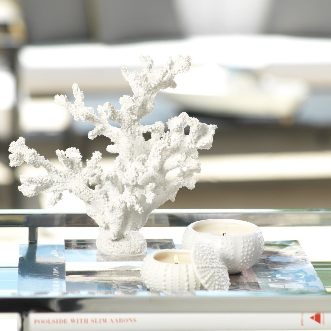 White Samar Coral on Acrylic Base - CARLYLE AVENUE