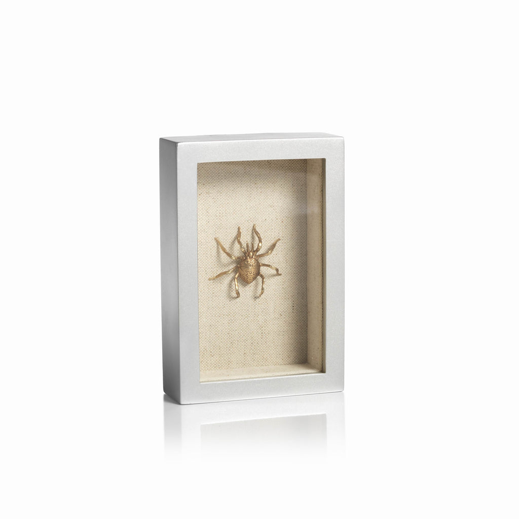 Insect in a Shadow Box