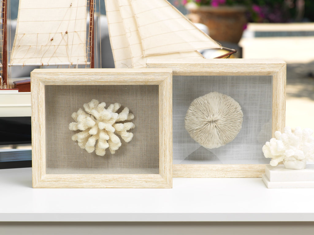Cats Paw Coral in Shadow Box