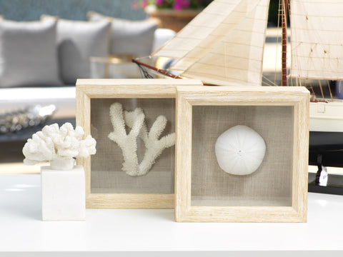 Sea Urchin in Shadow Box