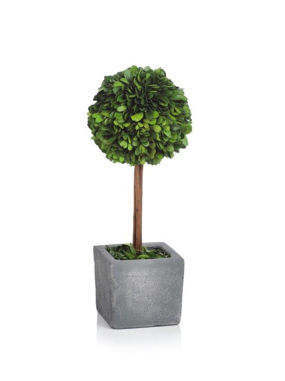 Versailles Topiary Collection - CARLYLE AVENUE