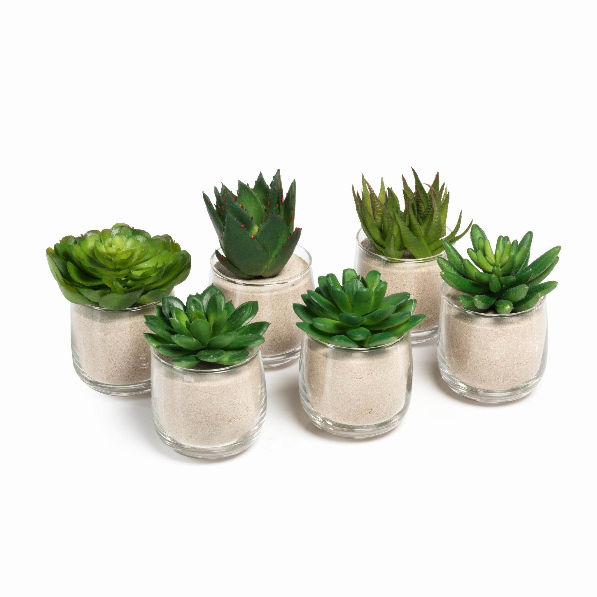 Succulent in Sand - Set of 6
