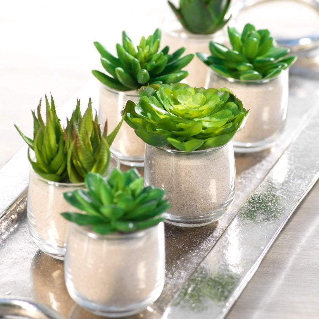 Succulent in Sand - Set of 6 - CARLYLE AVENUE