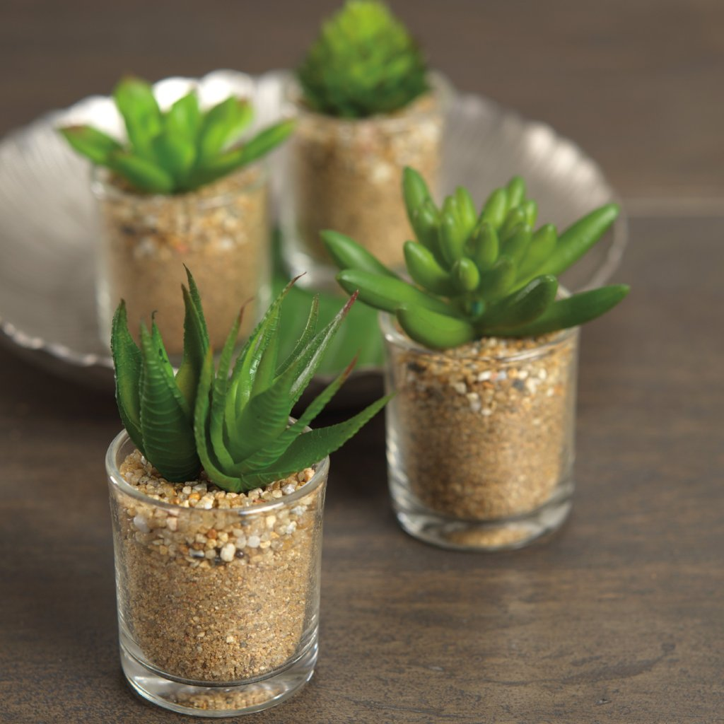 Cactus in Glass - Set of 4 Assorted - CARLYLE AVENUE