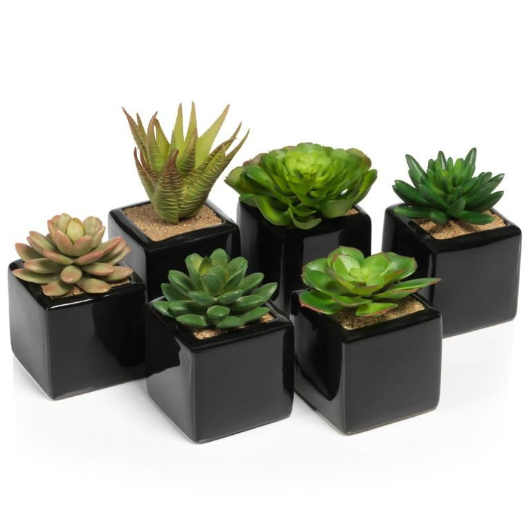 Assorted Desert Succulents in Ceramic Container - Set of 6 - CARLYLE AVENUE