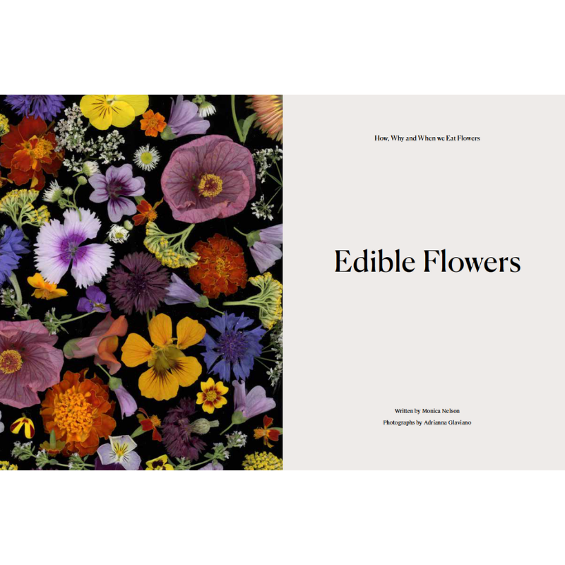 Siberian Fir Candle Dome Jar and Travel Tin - CARLYLE AVENUE