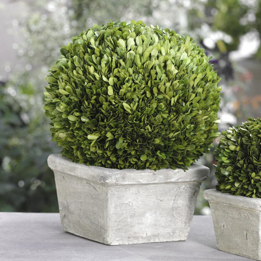 Single Ball Boxwood Topiary in Square Pot - Default Title - CARLYLE AVENUE