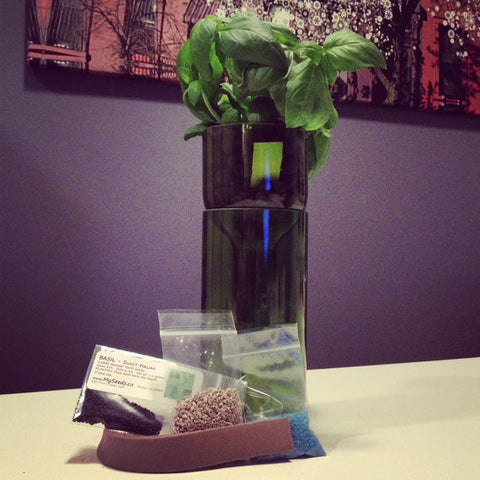 Recycled Self Watering Wine Bottle Planter Complete Kit -Basil or Parsley