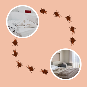 Are Bed Bugs Contagious in Apartments?