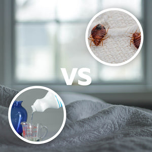 Does Bleach Kill Bed Bugs?