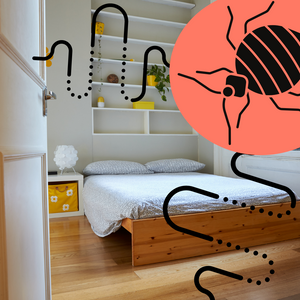 How to Prevent Bed Bugs from Spreading to Other Rooms