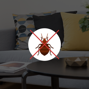Highly Recommended Bed Bug Traps That You Should Try