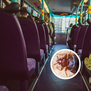 Bed Bugs on the Bus – Is It Possible to Get a Bed Bug Infestation at Home after a Bus Ride?