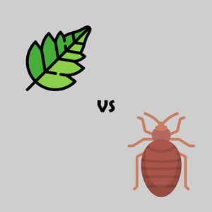 Bed Bug Bites or Poison Ivy Rash? – Learn How To Determine Which is Causing Your Red Patches