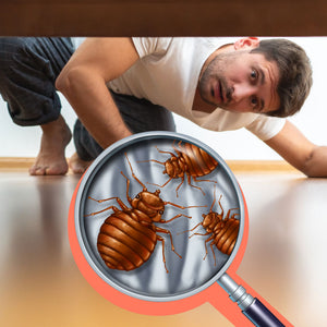 Why are Bed Bugs Such a Difficult Pest to Get Rid of?