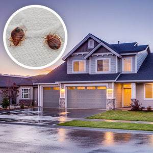 How to Make Bed Bugs Come Out of Hiding