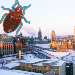 Bed Bug Ottawa: Dealing with Increasing Bed Bug Infestations