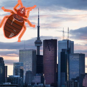 Bed Bug Toronto: Still Tops the Worst Cities with Bed Bugs