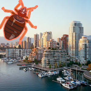 Bed Bug Vancouver: 3rd City with Worst Bed Bug Problems