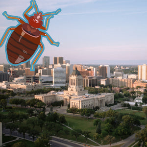 Bed Bugs Winnipeg: Still 2nd with Worst Bed Bug Problem