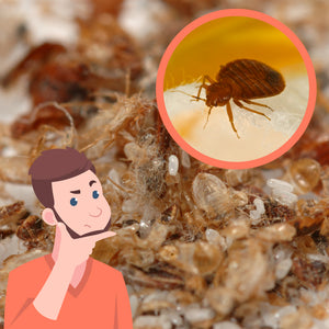 Are Bed Bug Feces Hard or Soft?