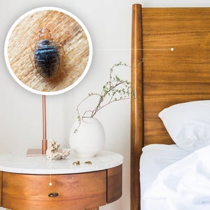 Bed Bugs on Wood – Do They Prefer Hiding in Wooden Furniture?