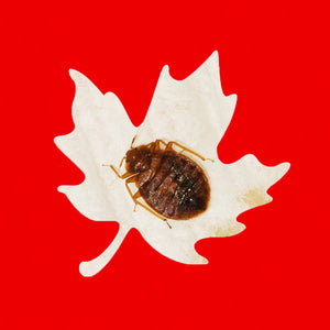 Bed Bug Sprays in Canada - What's Legal and What Isn't