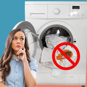 Do Bed Bugs Get Killed in the Washing Machine?
