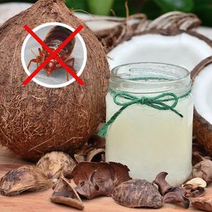 Does Coconut Oil Keep Bed Bugs Away?