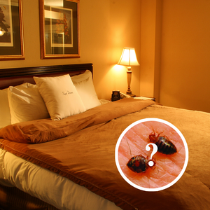 How Do You Know If Bed Bugs are Gone?