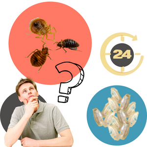 How Many Eggs Can Bed Bugs Lay a Day