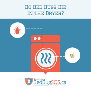 Do Bed Bugs Die in the Dryer?