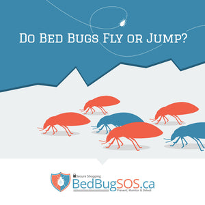 Do Bed Bugs Fly or Jump?