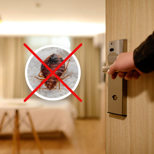 Tips on Preventing Getting Bed Bugs from Visitors and Avoiding an Infestation