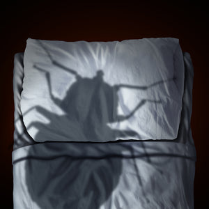 The State of Bed Bugs in Toronto
