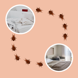are bed bugs contagious