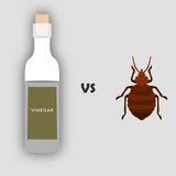 bed bugs and vinegar