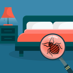 How to look got bed bugs