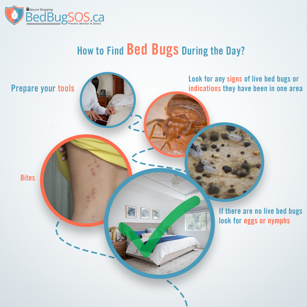 how to find bed bugs during the day
