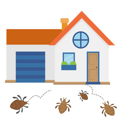 how do bed bugs get in your house