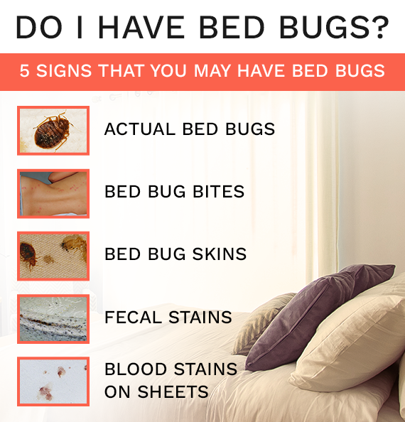Canada's source for bed bug treatment products – Bed Bug SOS