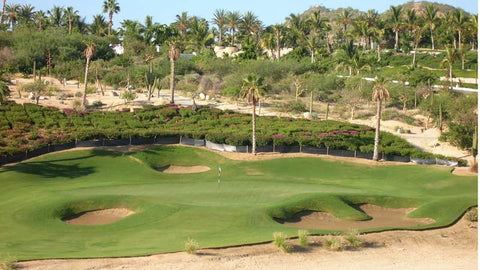 Palmilla bunkered green