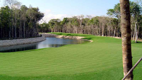 Fairway at Iberostar Playa Paraiso